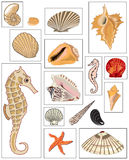 Illustrations of mussels and Sea Horse. Illustrations of mussels, clams and Sea Horse  handmade digital painting by me Royalty Free Stock Images