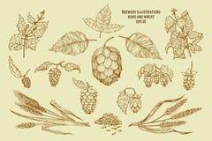 Illustrations originales de vintage pour la maison de bière, barre, bar, société de brassage, brasserie, taverne, salle, brasseri Image libre de droits