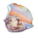 Illustrations of sea shells. Royalty Free Stock Images