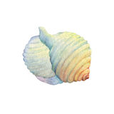 Illustrations of sea shells. Royalty Free Stock Photography