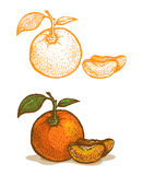 Illustrations of tangerine Stock Image