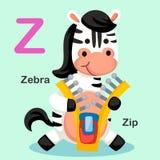 Illustrations-Tieralphabet-Buchstabe-Z-Reißverschluss, Zebra Lizenzfreie Stockbilder