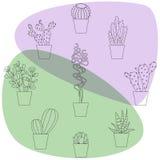 Illustrations tirées par la main de cactus Images libres de droits
