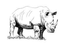 Illustrations tirées par la main de rhinocéros image libre de droits