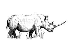 Illustrations tirées par la main de rhinocéros photographie stock
