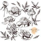Illustrations tirées par la main gravées de fleuri Photo stock