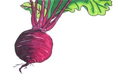 Illustrations. Vegetables. Juicy beets for borscht. Illustration. Vegetables, beets. Use to illustrate books on the packaging. Figure markers royalty free illustration