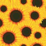 Illustrations-Vektor-nahtlose Muster-Blumen-Sonnenblume Lizenzfreie Stockfotografie