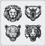 Illustrations of wild animals. Bear, lion, leopard and tiger. Royalty Free Stock Photo