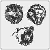 Illustrations of wild animals. Bear, lion and wolf. Stock Photography