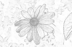 Illustrationsblumen von Rudbeckia hirta ist ein Farbentwurf stockbild