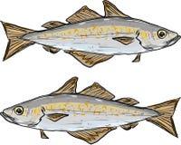 Illustrationsclipart-Vektorbild der Pollockfische freihändiges Stockfotos