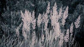 Illustrationshintergrund-Beschaffenheitskonzept: hohes Licht des Grases morgens, verblaßte Farben Stockbilder
