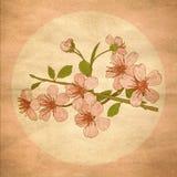 Illustrationskirschblüten Stockbild