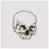 Illustrationvektor av skallen Arkivbilder