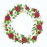 Illustrationwreath de la acuarela de las rosas rojas y de las ramas verdes, licencia Ejemplo para las tarjetas de felicitación, i Imágenes de archivo libres de regalías