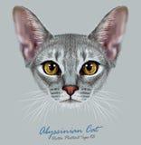 Illustrativ stående av den Abyssinian katten vektor illustrationer