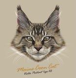 Illustrativ stående för vektor av Maine Coon Cat vektor illustrationer