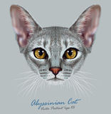 Illustrative Portrait of Abyssinian Cat. Cute breed of domestic short haired cat with a distinctive Blue ticked tabby coat and with Yellow eyes Royalty Free Stock Image