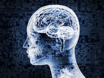 Illustrative representation of female brain anatomy Royalty Free Stock Images