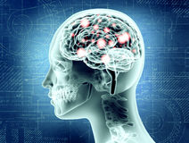 Illustrative representation of female brain anatomy Stock Image