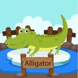 Illustrator of Alligator in the zoo Stock Image