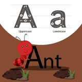 Illustrator of ant with a font. Isolated for education Royalty Free Stock Photography