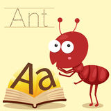 Illustrator of A for Ant vocabulary Stock Photo
