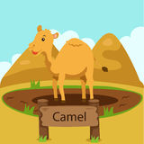 Illustrator of camel in the zoo Stock Photography