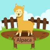 Illustrator de la alpaca en el parque zoológico Foto de archivo