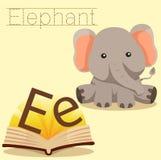 Illustrator of E for Elephant vocabulary vector illustration