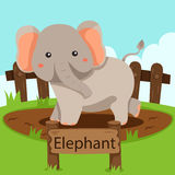 Illustrator of Elephant in the zoo Royalty Free Stock Image
