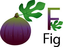 Illustrator F font with fig. Vegetables Royalty Free Stock Photo