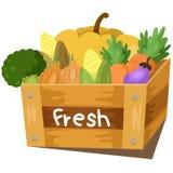Illustrator of fresh vegetable Stock Photos