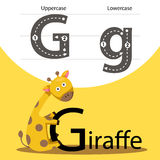 Illustrator with g font animal Stock Photos