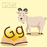 Illustrator of G for Goat vocabulary Royalty Free Stock Image