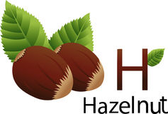 Illustrator h font with hazelnut Stock Images