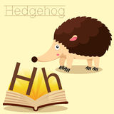 Illustrator of H for Hedgehog vocabulary Royalty Free Illustration