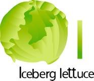 Illustrator i font with iceberg lettuce Stock Photography