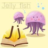 Illustrator of J for Jelly fish vocabulary stock illustration