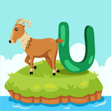 Illustrator of Letter 'U is for Urial' Stock Photography