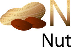 Illustrator n font with nut Stock Photos
