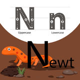 Illustrator of newt with n font. Isolated for education Stock Photo