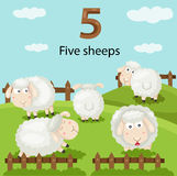 Illustrator of number five sheeps Stock Image