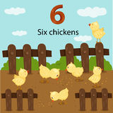 Illustrator of number six chickens Stock Images