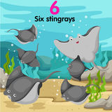 Illustrator of number with six stingrays Stock Photo