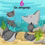Illustrator of number with six stingrays Stock Photo