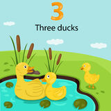 Illustrator of number three with ducks Stock Images