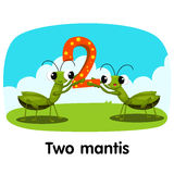 Illustrator of number two mantis Royalty Free Stock Photo
