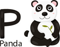 Illustrator of P with panda Royalty Free Stock Photography